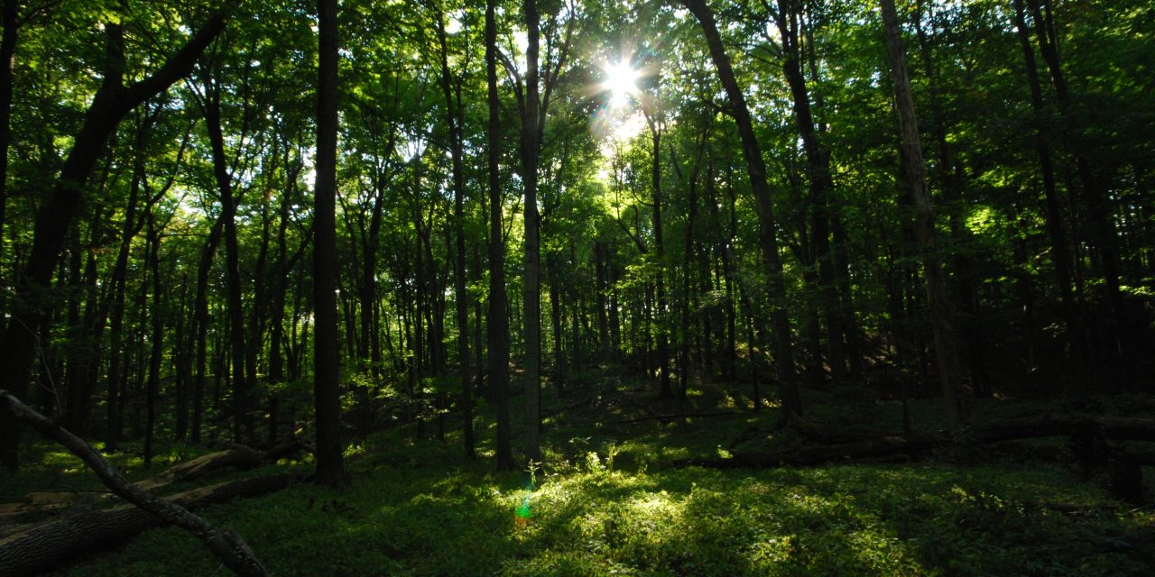 Avon raises US$7.5m to support global reforestation