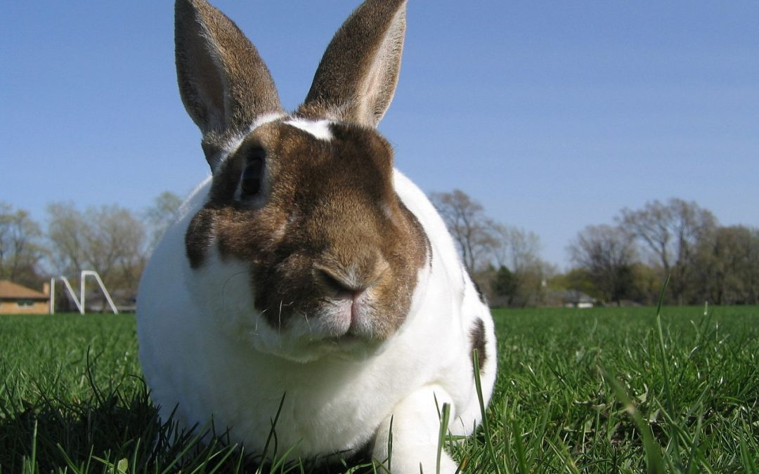 Will the US ban animal testing? Federal Bill introduced to House of Representatives