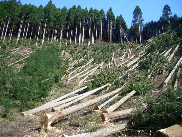 Efforts to tackle global deforestation risk being side lined, says Unilever Chief Executive