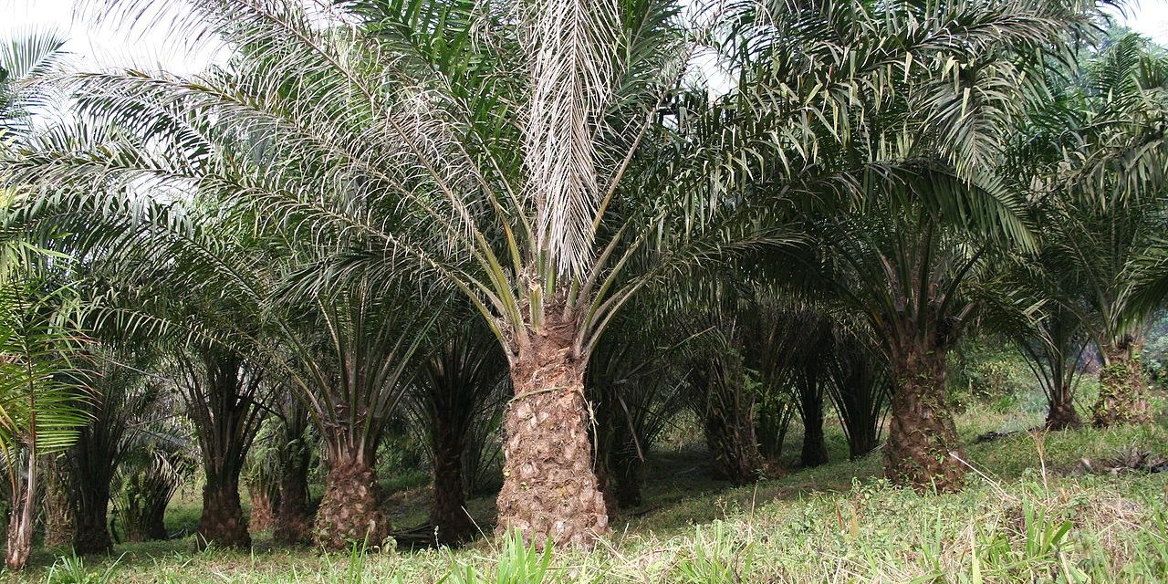 Demand for bio-based cosmetics will help palm oil market to reach value of US$88 billion by 2022