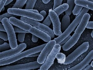 Cosmetic start-up company AOBiome promotes live bacteria as secret to healthy skin