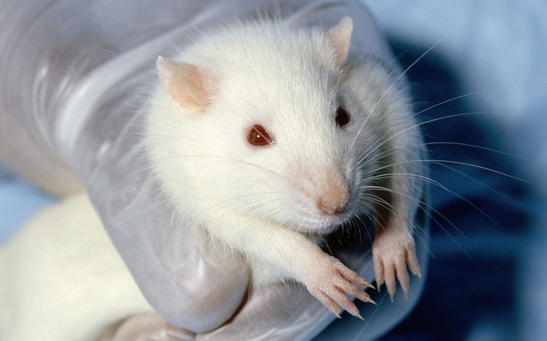China to end animal testing? UK scientists lend expertise in animal welfare and alternative testing methods