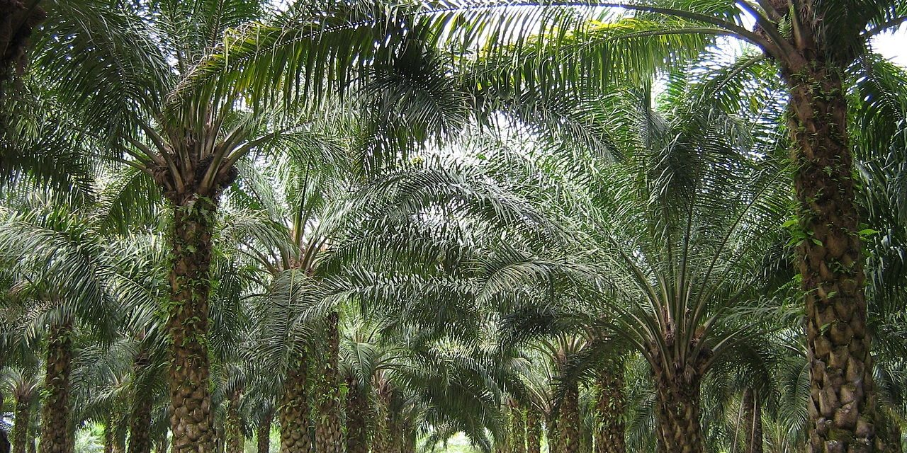 Golden Agri-Resources to achieve fully traceable plantation palm oil in four years