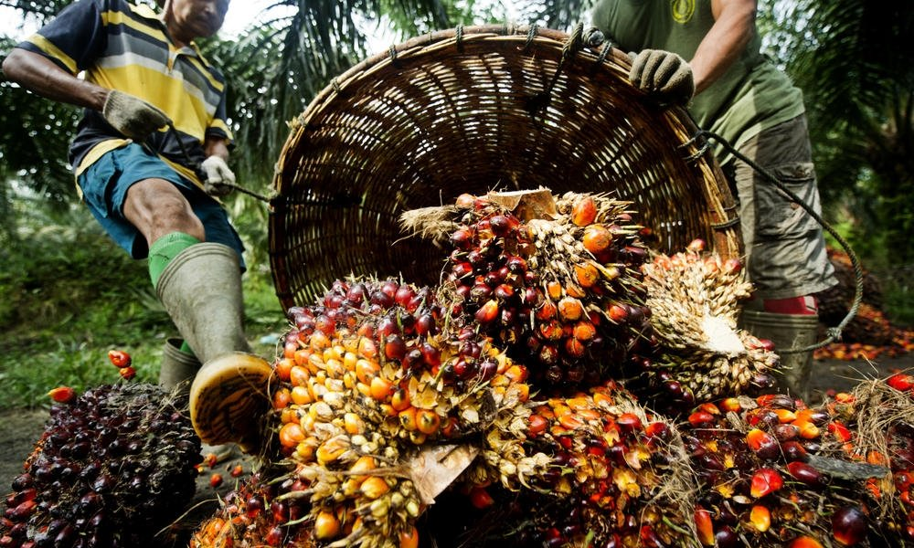 L'Oréal first Palm Oil Progress report highlights positive steps