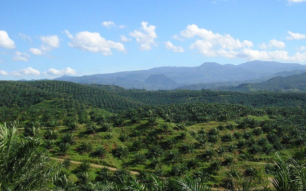 IOI drops palm olive law suit against RSPO