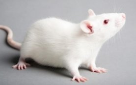 Will Brexit mean a return to animal testing? NAVS warns against regulatory roll-back