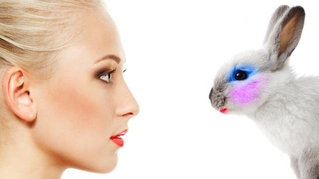 Switzerland joins fight on animal cruelty with ban on animal-tested cosmetics