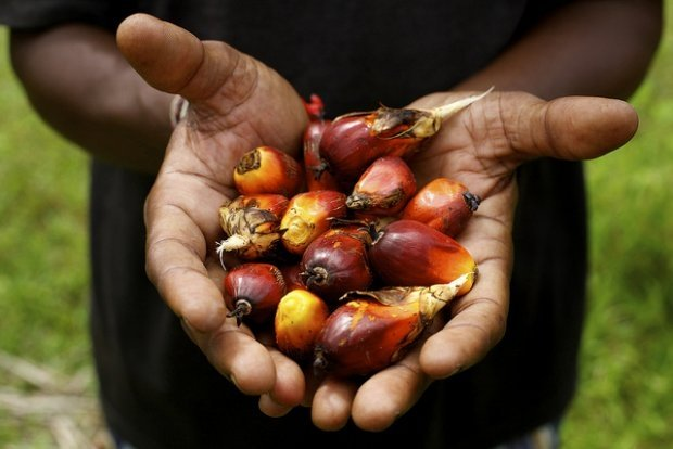 RSPO heralds European Parliament Committee commitment for 100 percent certified sustainable palm oil