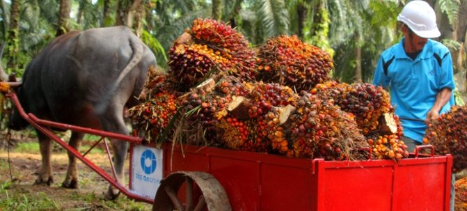 Unilever resumes sourcing palm oil from IOI after RSPO ban lifted