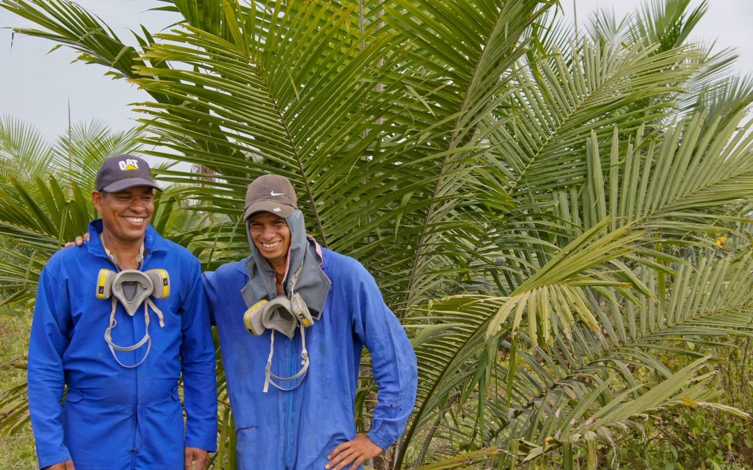 Henkel partners with Solidaridad to promote sustainable palm oil and support Colombian farmers