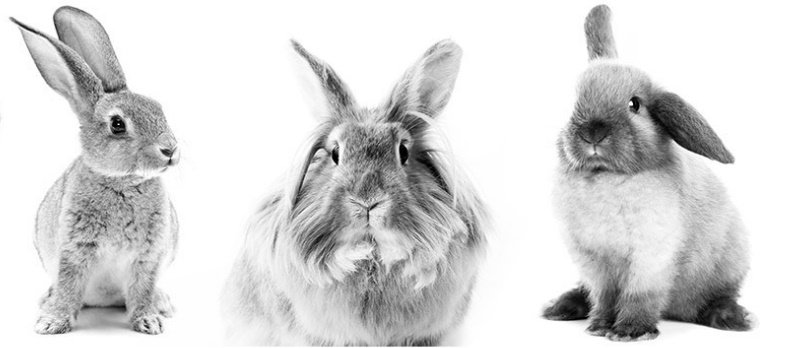 MEP calls for EU to promote global ban on animal testing for cosmetics