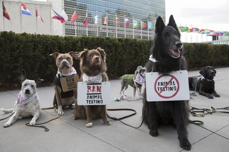 The Body Shop and Cruelty Free International organise first animal protest outside US United Nations headquarters