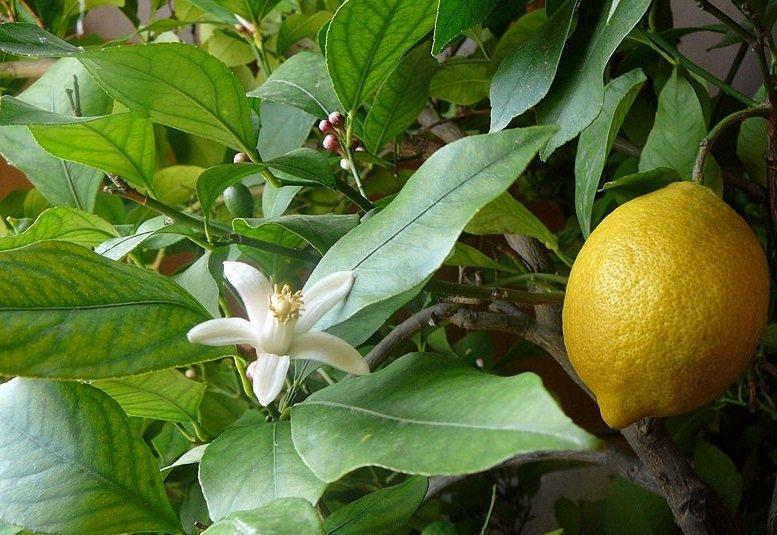 Givaudan: citrus shortage to send raw materials prices soaring