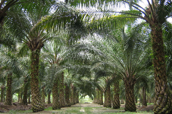 Unilever announces support for Sabah sustainable palm oil project at Global Climate Action Summit