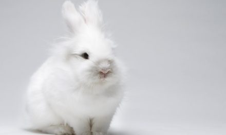 Cruelty-Free Cosmetics Bill endorsed by California Democratic Party