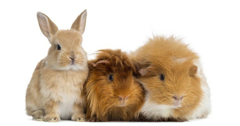 China animal testing: just how long will it hold out against the growing vegan movement?