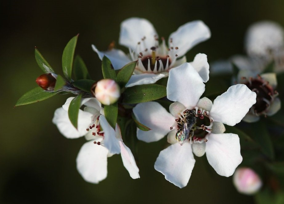Manuka honey scandal: Evergreen Life pleads guilty to spiking honey to produce 'liquid gold'